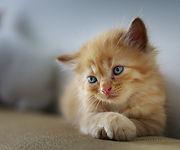 Cat-Supplements.jpg