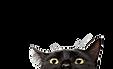 cat-supplement-1.jpg
