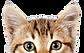 cat_PNG50485.png