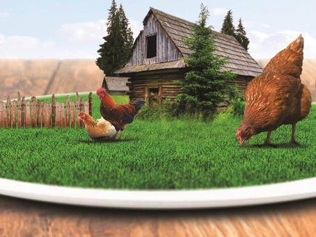 Mâncare sănătoasă. Din ogradă direct la ușa ta!