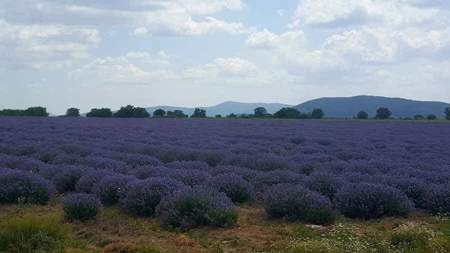 Provence de Bulgaria, beneficii lavanda