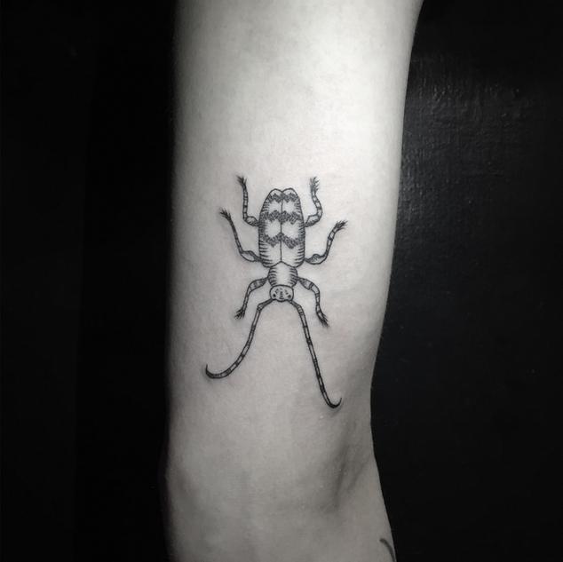 Beetle by Nika