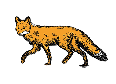 Just the fox.png
