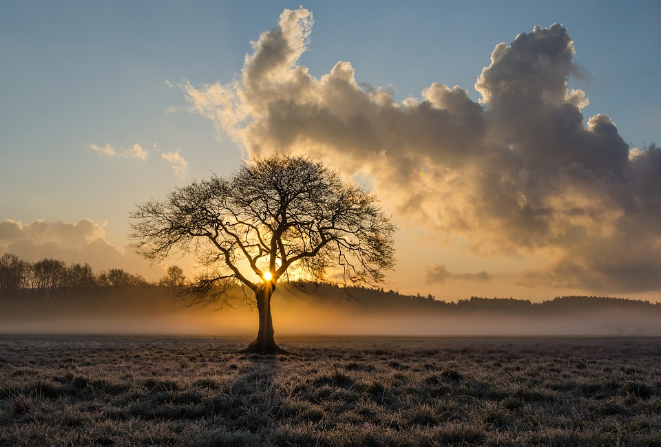 lone-tree-jpg