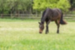 Spring Horse2.jpg