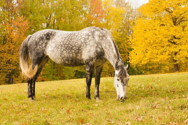 Autumn 21 horse for web_edited.jpg