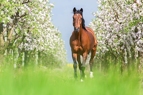 spring horse.jpg