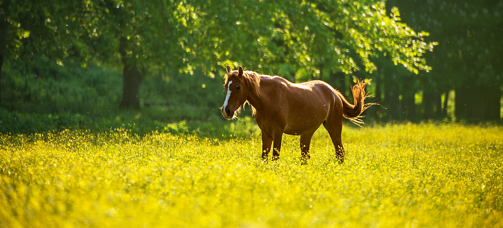iStock-summer horse_edited.png
