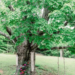 Ancient Ceremony Tree