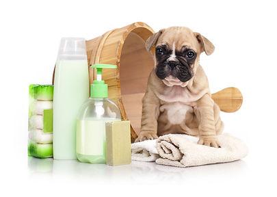French bulldog puppy in wooden wash basi