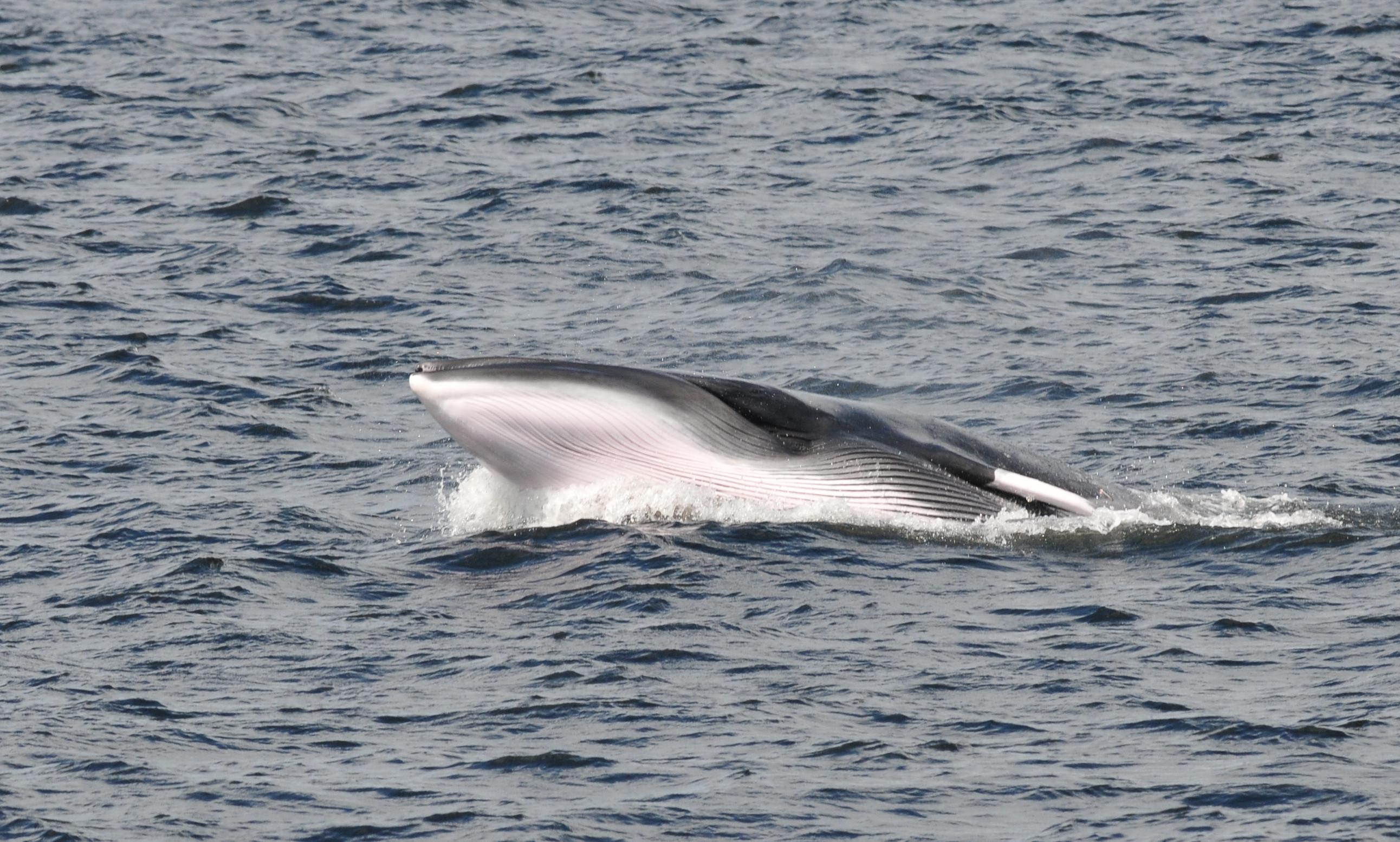 Observation de baleines