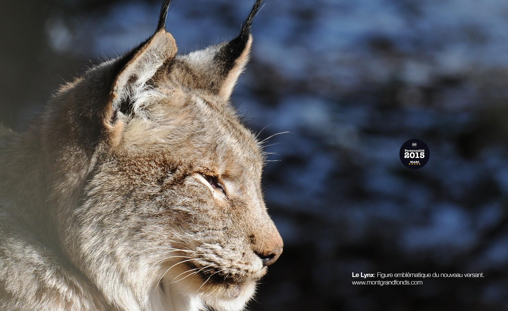 le lynx.jpg