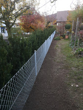Hecke mit Zaun