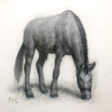 Cavalinho pastando