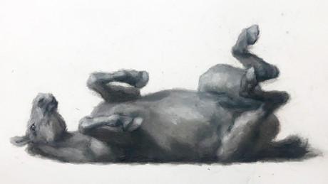 Cavalo Caído