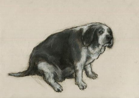 Cachorro Bravo #2