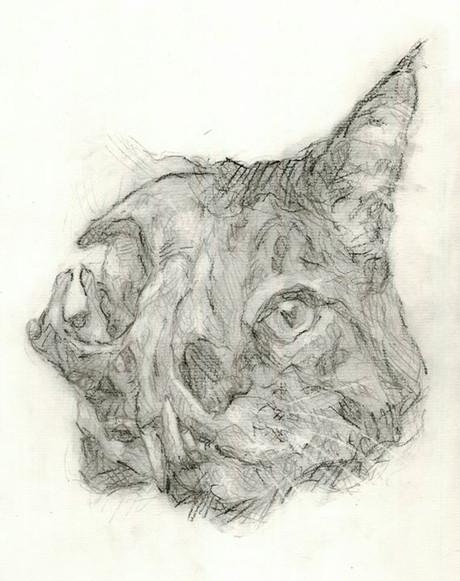 Cabeça de Gato