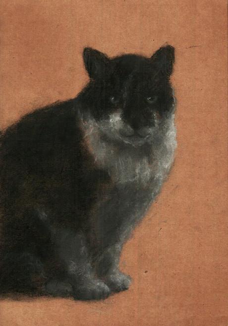Gato Malhado