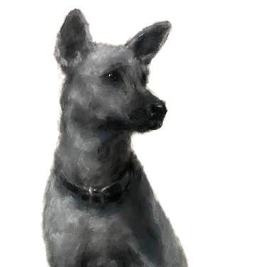 Cachorro Comportado