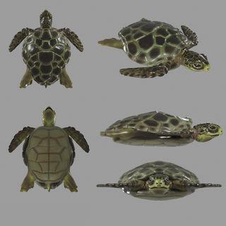 Turtle Model