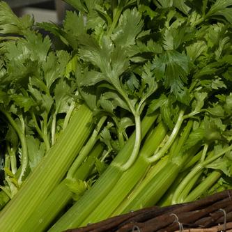 Baked Celery