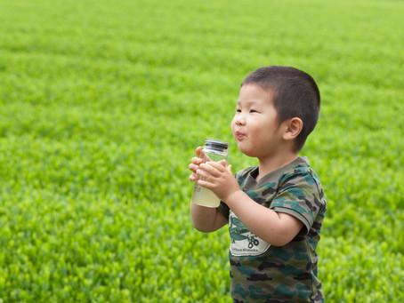 緑茶はカフェインを含むから、子供に飲ませてはいけない?
