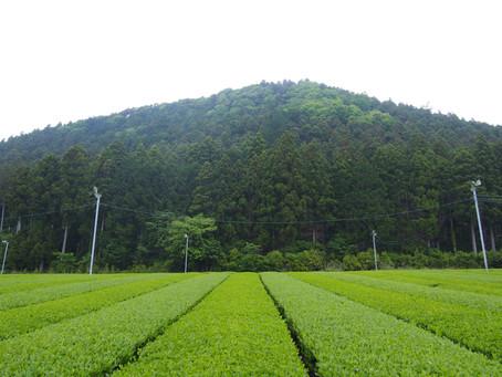 こどもと一緒にたのしむ、オーガニック日本茶