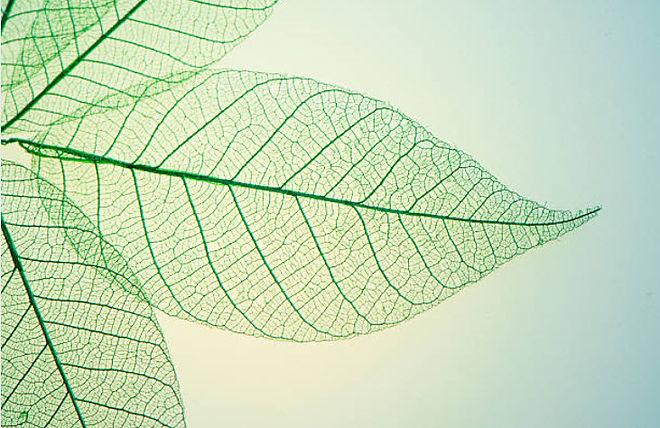 plant 2.jpg