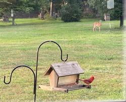 Visiting bird feeder