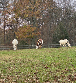 Auby, Scout, Glory