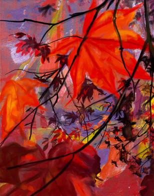 Red Maple, Dusk