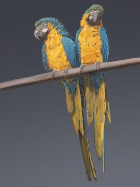 Brace of Parrots