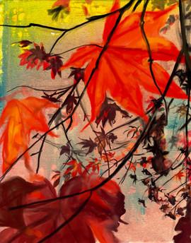 Red Maple, Dawn