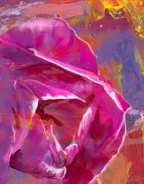 Fuchia Tulip, Bold