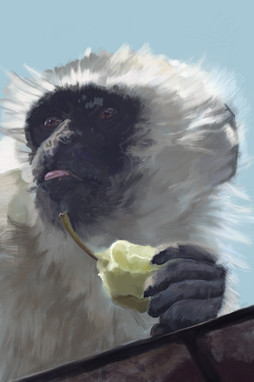 Monkey With an Apple