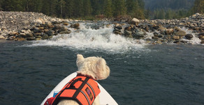 Does a dog need to wear a life jacket?