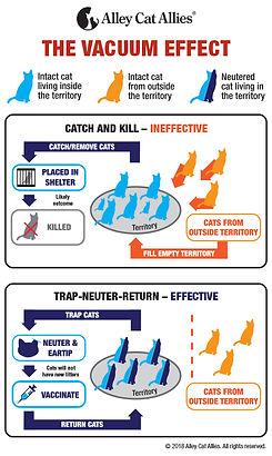 VacuumEffect-Graphic.jpg