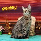 Paisley (1).jpg