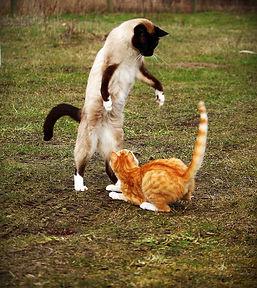 cat-1234941_960_720.jpg