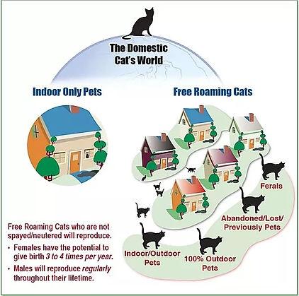 Community Cats.jpg