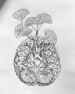 Ginkgo/Brain
