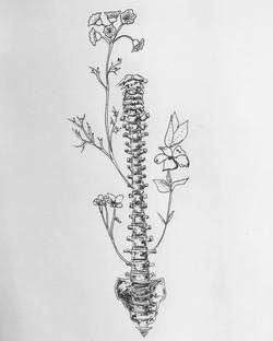 Spring Spine