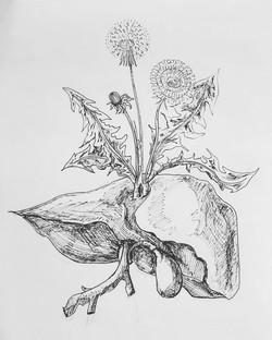 Dandelion/Liver