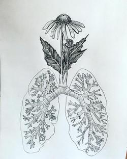 Echinacea/Relief