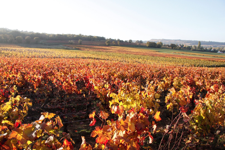 Vignes de Mellecey