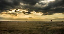 Ol Pejeta, Kenya