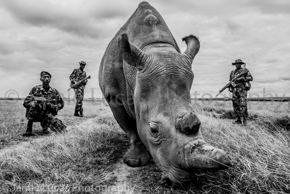 Northern White Rhinos & Guards