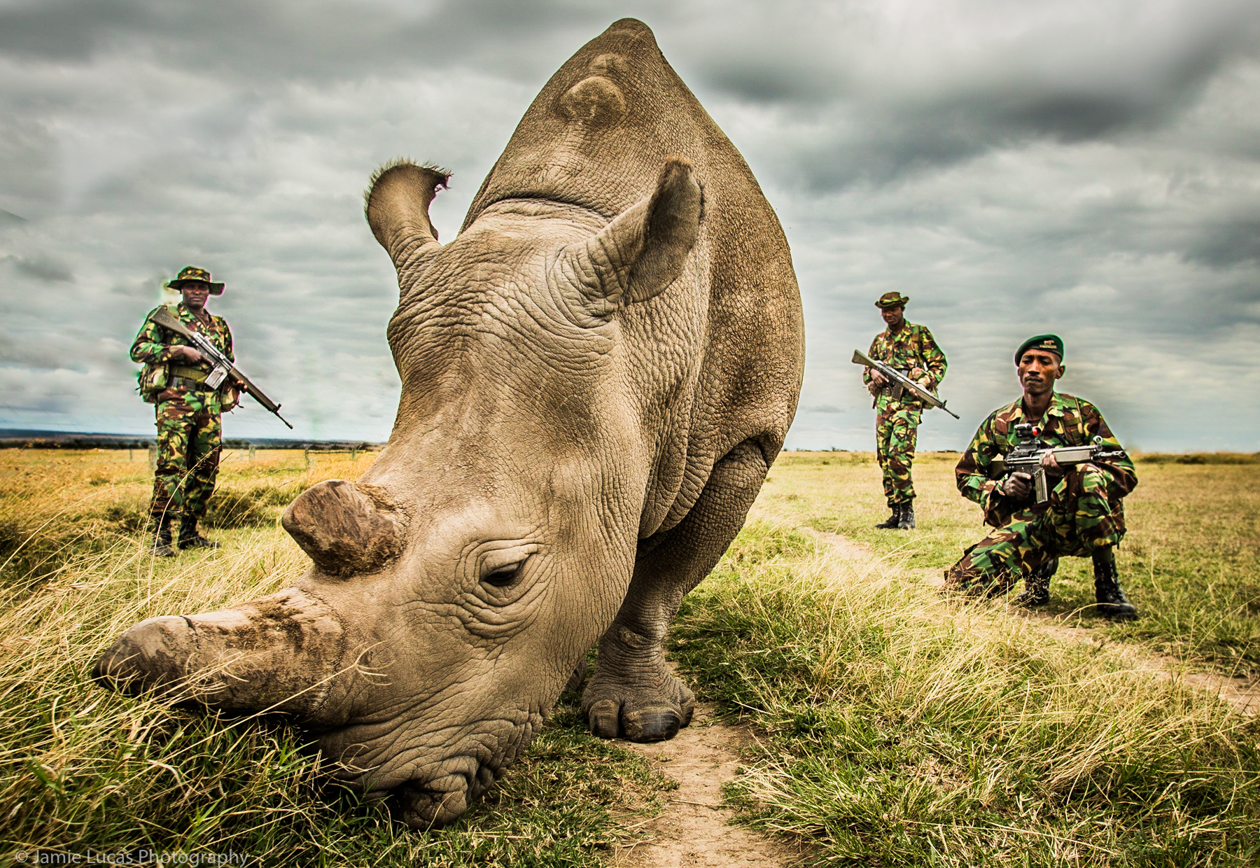 Northern White Rhino