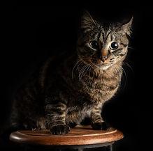 スカイラボの猫のジロー 黒バック