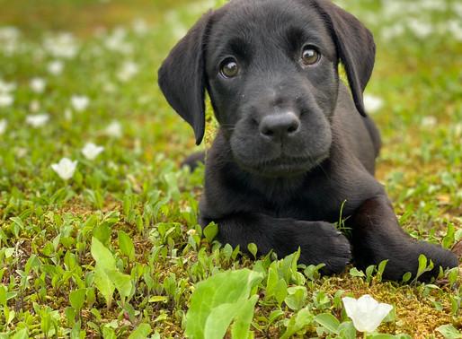犬のトレーナーがもし新たに犬を迎えることになったら何をする?